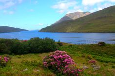 Killary Fjord, Ireland.  This is a lovely place!!  Great to be there to see it with the rhododendrons all around!