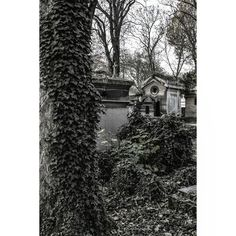 Resguárdate en la enredadera. #paris #perelachaise #graveyard #blackandwhite #monochrome #nature #tree #old #ancient #season #vine #creeper #outdoors #park #fall #travel #garden #graveyardphoto #nopeople #wood #mausoleum #grave