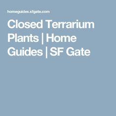 Closed Terrarium Plants | Home Guides | SF Gate