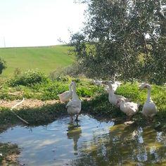 Gooses just around the  corner