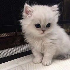 Cute Baby Cats, Cute Little Animals, Cute Cats And Kittens, Cute Funny Animals, Kittens Cutest, Cute Animals Images, Pretty Cats, Beautiful Cats, Photo Chat