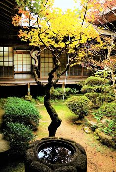 Collection of photos showing the beauty of Japan including landscape photos,Japanese martial arts, Samurai history and beautiful Japanese women. Small Japanese Garden, Japanese Tea House, Japanese Landscape, Japanese Garden Design, Japanese Interior, Japanese Architecture, Japanese Gardens, Chinese Courtyard, Chinese Garden