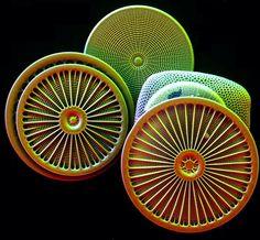 Diatoms mostly Arachnoidiscus. Coloured electron microscopy of diatoms species Arachnoidiscus ZEISS EVO SEM by @zeiss_microscopy
