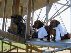 Pets Category ~ my mini dachshunds, Jake & Chester at the Wright Brothers Memorial Park