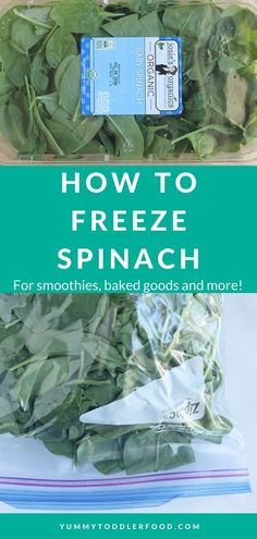 Learn the easiest way to freeze fresh spinach to prevent food waste—and use later in smoothies, baked goods, and easy meals! #frozenspinach #spinachrecipes #howtofreezespinach Healthy Freezer Meals, Healthy Family Meals, Easy Meals, Toddler Meals, Kids Meals, Toddler Food, Spinach Egg Muffins, Smoothie Recipes, Smoothies