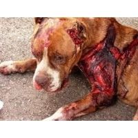 Animal Advocates: Sign petition to pass an Animal Abuse Registry in NYS