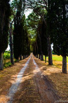 country road, Tuscany