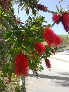 Gibellina Flowers