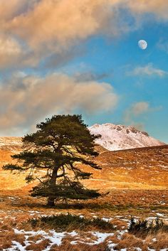 A solitary tree on a windswept valley of the Mourne Mountains bows gracefully towards the rising moon while a snow covered peak looks on.