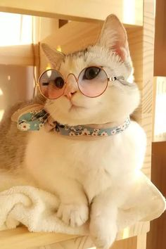 Adorable Funny Cats 29