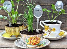Intimate wedding tasses pots de fleurs