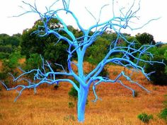 Chris Killorn paints dead trees in bright colors in the mountains of Colorado!! Awesome