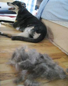 5 Best DIY Fur Removers