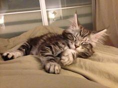 votez pour ce chaton sur http://www.zoomalia.com/photomalia/jeu/42 #jeux #concours #zoomalia #photomalia #animalerieEnLigne #animalerie #accessoires #animaux #aquariophilie