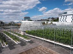 The future of food: inside the world's largest urban farm – built on a rooftop | Cities | The Guardian Organic Nutrients, Urban Farmer, City Farm, Urban Agriculture, Greenhouse Gases, Sustainable Development, Fruit Trees, The Guardian, Rooftop