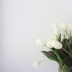 white tulips   Made From Scratch
