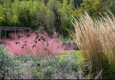 Pink Grasses: 11 Ideas for Muhlenbergia in a Landscape: Gardenista