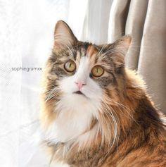 Ce chat aime associer son eye-liner à un rouge à lèvres audacieux pour un look vraiment spectaculaire. | 16 photos de chats qui sont plus doués que vous pour faire un trait d'eye-liner