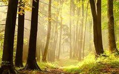 forest에 대한 이미지 검색결과