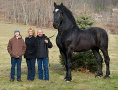 giant horse - Google Search