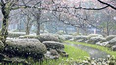 Landscape Designer Madison Cox Shares the World's Most Beautiful Gardens Photos Hornbeam Hedge, Endangered Plants, Woodland Flowers, Gardening Books, Gardening Tips, Most Beautiful Gardens, Winter Trees, Parcs, Trees And Shrubs