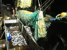 Pollock fishing.... Alaska Fishing, Fun, Lol, Funny