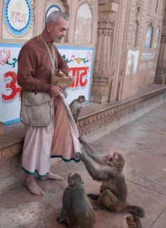 monkeys at keshi ghat, india Mother India, Amazing India, Indian People, India Culture, Mughal Empire, Mysterious Places, Varanasi, World Cultures, India Travel