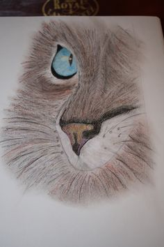 Cats eye in colored pencil by Denise Crawford