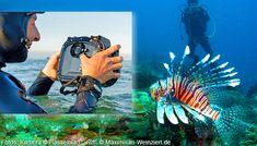 Maximilian Weinzierl – Fotografie und viel mehr: Hasselblad: Mittelformat unter Wasser Maximilian, Scuba Diving, Photography, Animals, Photos, Cameras, Nature, Diving, Animaux