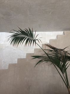 Life As A Water Element - loq-journal: Philip Dixon House Dixon Homes, Home Decoracion, Green Plants, Planting Flowers, Plant Leaves, Pictures, Greenery, Neck Massage, Wall Colors