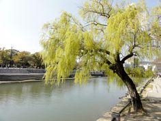 Wunderschöner Blick auf den Hiroshima Peace Memorial Park