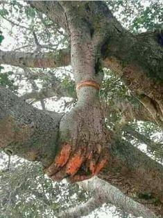 Different tree image