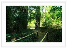 20 - Caminho tropical 2
