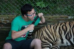 Tourist rushed to hospital after being mauled by TIGER at wildlife park where visitors 'pet' big cats - Mirror Online Wild Tiger, Green Monsters, Wildlife Park, Once In A Lifetime, Animal Welfare, Big Cats, Stuff To Do, Thailand, In This Moment