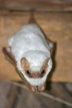 Maybe we should get this bat as a pet....