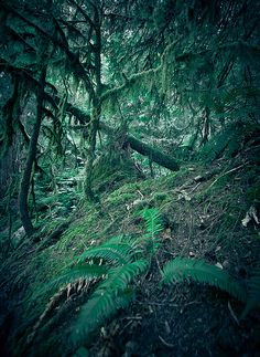 The forest near Crescent Lake, Olympic National Park, Washington