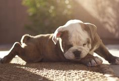 too tired to even lay his head down...awww