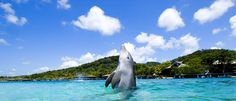 Anthony Keys - Roatan, Honduras - the BEST dolphin encounter in the WORLD. Plus a great place to stay to snorkel and/or dive!!!
