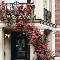 Imagem de rose, red, and flowers Beautiful Flowers, Beautiful Places, Landscape Illustration, Illustration Art, Diy Art, Planting Flowers, Greenery, Bloom, Exterior