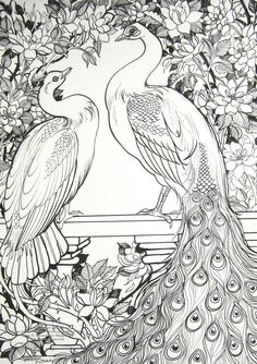 peacock ink drawing - Google Search