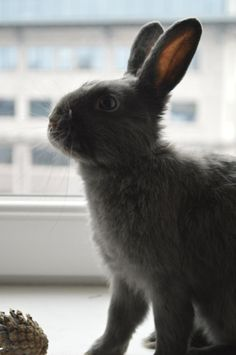 Bunny Has a Photoshoot at the Window 4