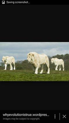 I love albino