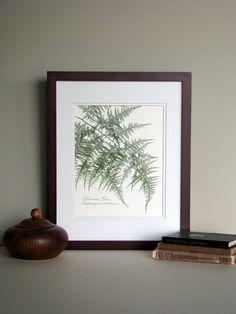 Pressed fern print, 11x14 double matted, Plumosa fern, woodland country, forest green, wall art no. 0021