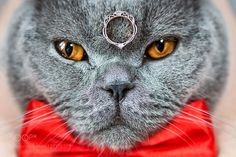 Lord of the ring by sebo