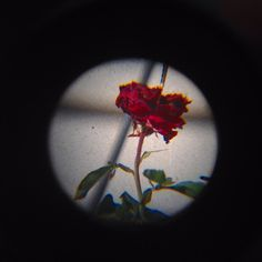 Rose through a loupe, Lora Mathis
