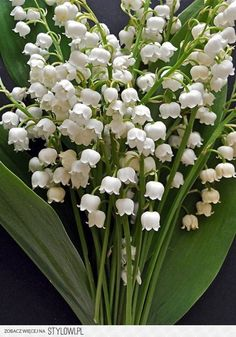 This pin is for you Lily - Lily of the valley. My mothers favorite flower