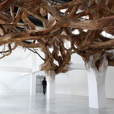 Installation by Henrique Oliveira where a twisted entanglement of tree branches appears to grow organically from the beams of Paris' Palais de Tokyo museum.
