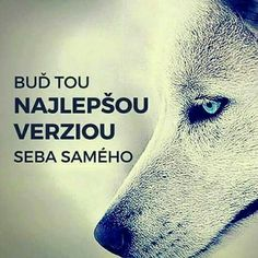A i lepší True Words, Self Improvement, Motto, Motivation, Sayings, Quotes, Empire, Life, Beautiful