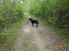 Hiking through Chryplwy Nature Park - Beausejour #GILOVEMANITOBA