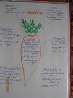 """Kiscsoportos projektek - """" Gyermekkorunk jelei ott maradnak életünk helyszínein, ahogy a virág illata is ott marad a szobában, amit díszített""""  - Chateubriand Environmental Studies, Biology, Montessori, Kindergarten, Bullet Journal, Study, Homeschooling, Classroom, Projects"""